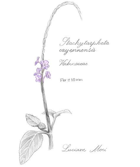 029--Diario-de-estudos-botanicos-Lu-Mori-.jpg