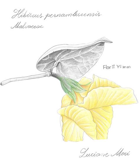 030-Diario-de-estudos-botanicos-Lu-Mori-.jpg
