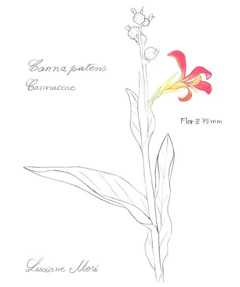 032-Diario-de-estudos-botanicos-Lu-Mori-.jpg
