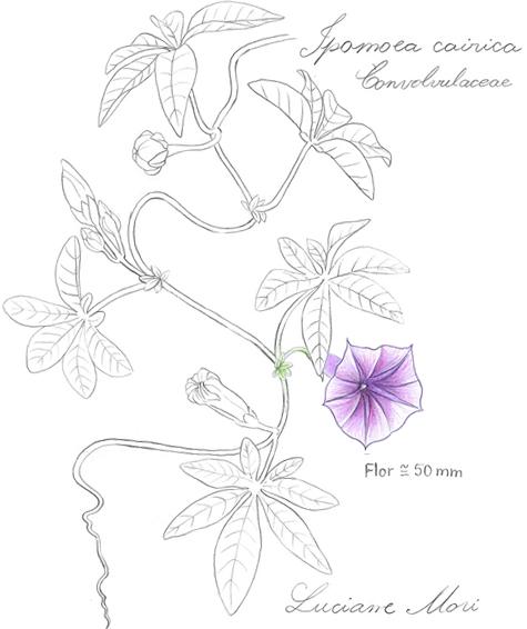 031-Diario-de-estudos-botanicos-Lu-Mori-.jpg