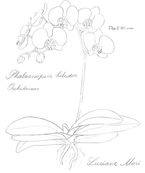 034-Diario-de-estudos-botanicos-Lu-Mori-.jpg