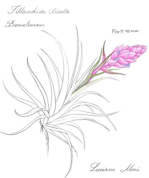 033-Diario-de-estudos-botanicos-Lu-Mori-.jpg