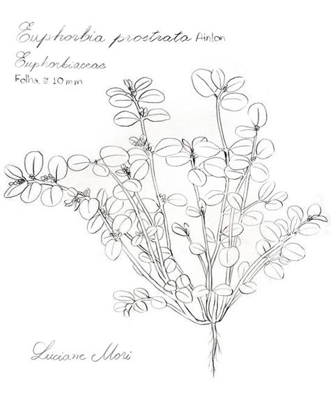 035-Diario-de-estudos-botanicos-Lu-Mori-.jpg