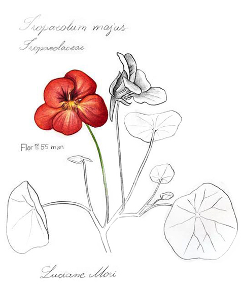036-Diario-de-estudos-botanicos-Lu-Mori-.jpg