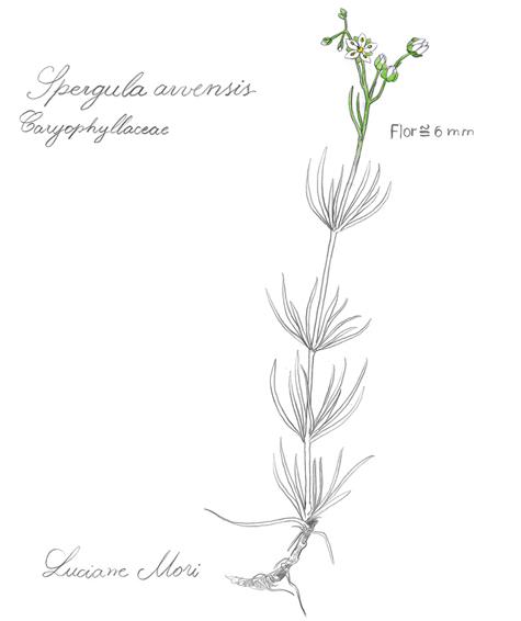 038-Diario-de-estudos-botanicos-Lu-Mori-.jpg