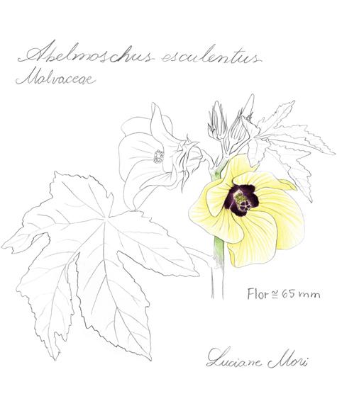 037-Diario-de-estudos-botanicos-Lu-Mori-.jpg