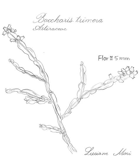 039-Diario-de-estudos-botanicos-Lu-Mori-.jpg