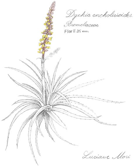 040-Diario-de-estudos-botanicos-Lu-Mori-.jpg