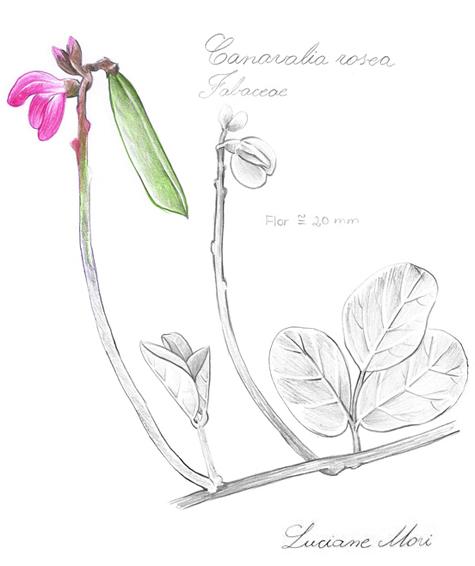 041-Diario-de-estudos-botanicos-Lu-Mori-.jpg