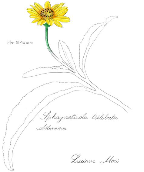 043-Diario-de-estudos-botanicos-Lu-Mori-.jpg
