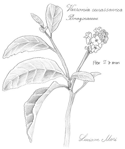 042-Diario-de-estudos-botanicos-Lu-Mori-.jpg