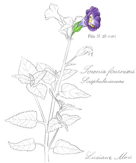 044-Diario-de-estudos-botanicos-Lu-Mori-.jpg