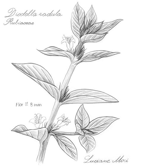 045-Diario-de-estudos-botanicos-Lu-Mori-.jpg