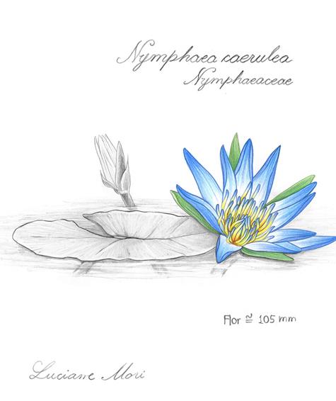 047-Diario-de-estudos-botanicos-Lu-Mori-.jpg