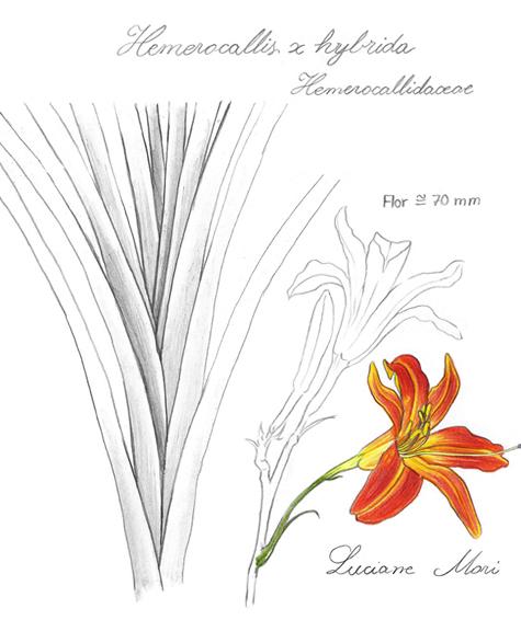 046-Diario-de-estudos-botanicos-Lu-Mori-.jpg