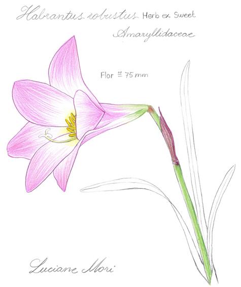 048-Diario-de-estudos-botanicos-Lu-Mori-.jpg