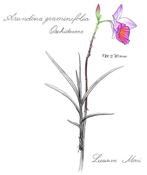 051-Diario-de-estudos-botanicos-Lu-Mori-.jpg