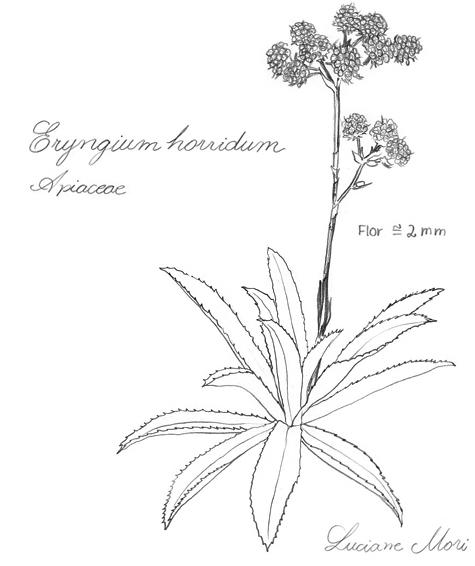 050-Diario-de-estudos-botanicos-Lu-Mori-.jpg