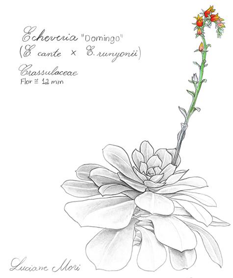 053-Diario-de-estudos-botanicos-Lu-Mori-.jpg