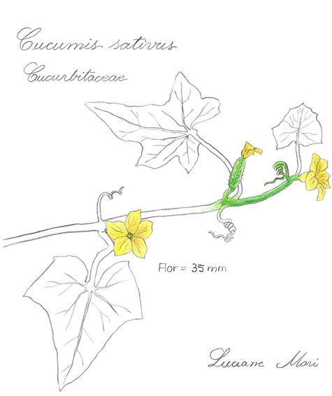 054-Diario-de-estudos-botanicos-Lu-Mori-.jpg