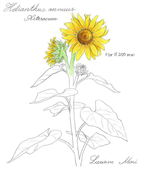 055-Diario-de-estudos-botanicos-Lu-Mori-.jpg