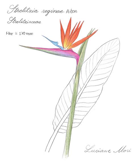 056-Diario-de-estudos-botanicos-Lu-Mori-.jpg