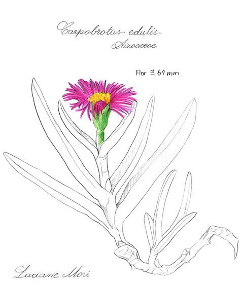 057-Diario-de-estudos-botanicos-Lu-Mori-.jpg