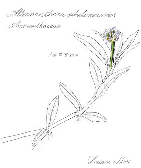 058-Diario-de-estudos-botanicos-Lu-Mori-.jpg