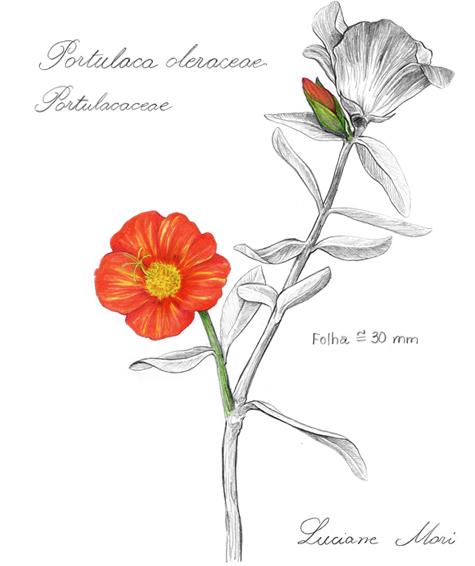 059-Diario-de-estudos-botanicos-Lu-Mori-.jpg