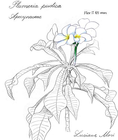 060-Diario-de-estudos-botanicos-Lu-Mori-.jpg