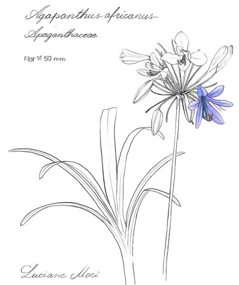 062-Diario-de-estudos-botanicos-Lu-Mori-.jpg