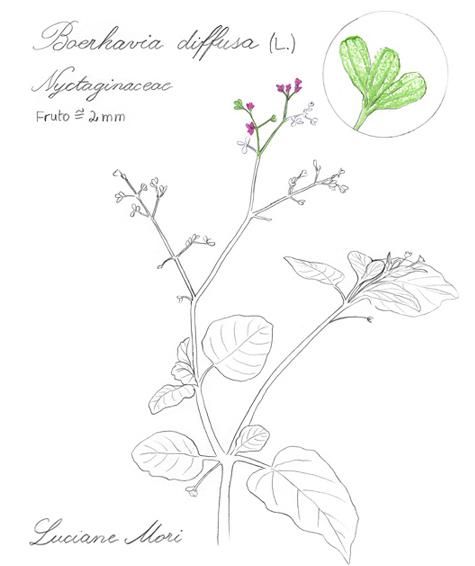 063-Diario-de-estudos-botanicos-Lu-Mori-.jpg