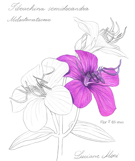 064-Diario-de-estudos-botanicos-Lu-Mori-.jpg