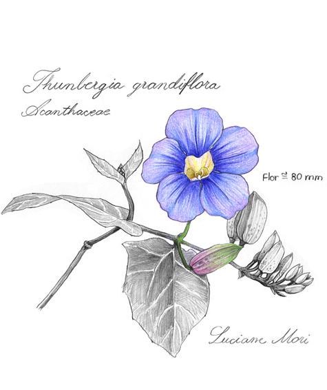 065-Diario-de-estudos-botanicos-Lu-Mori-.jpg