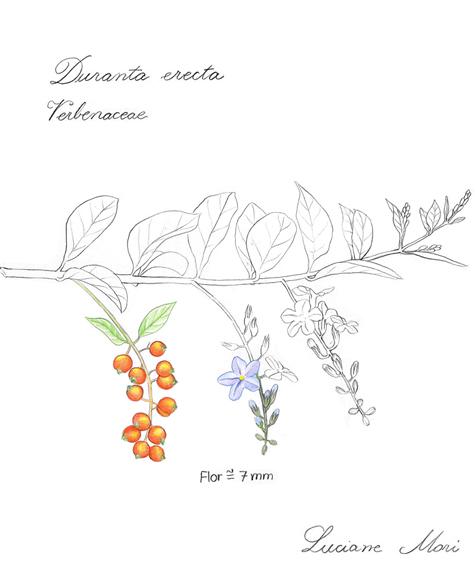 066-Diario-de-estudos-botanicos-Lu-Mori-.jpg