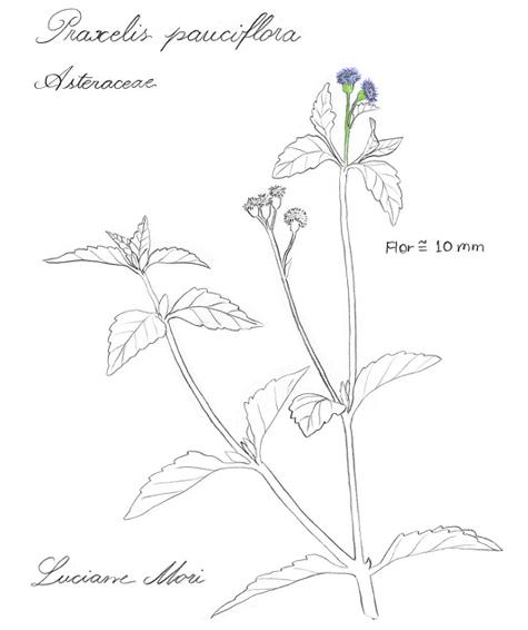 067-Diario-de-estudos-botanicos-Lu-Mori-.jpg