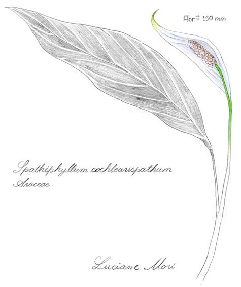 068-Diario-de-estudos-botanicos-Lu-Mori-.jpg