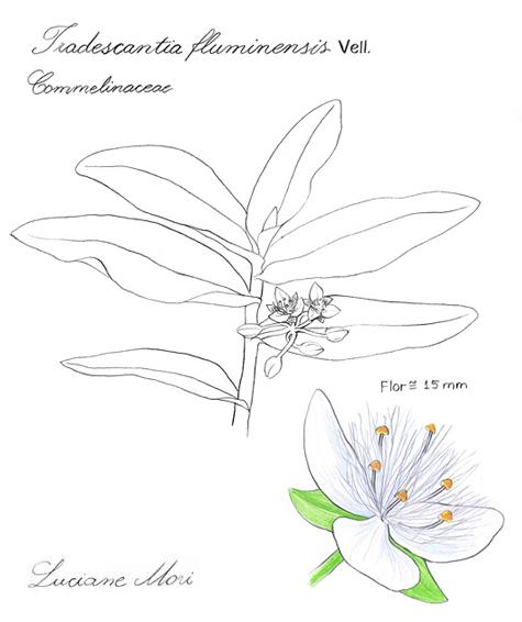069-Diario-de-estudos-botanicos-Lu-Mori-.jpg