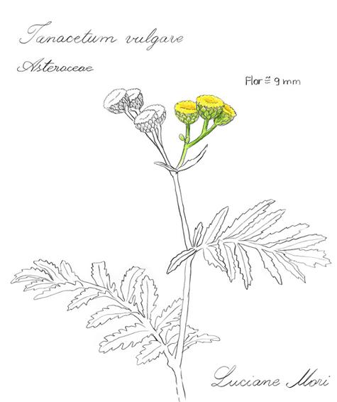 070-Diario-de-estudos-botanicos-Lu-Mori-.jpg