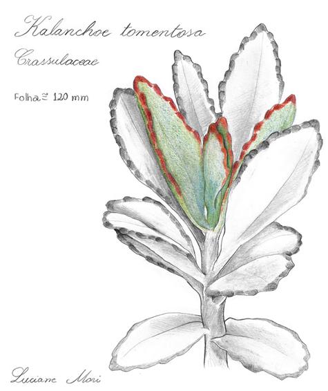 071-Diario-de-estudos-botanicos-Lu-Mori-.jpg