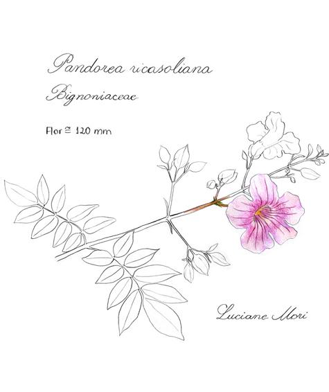 072-Diario-de-estudos-botanicos-Lu-Mori-.jpg