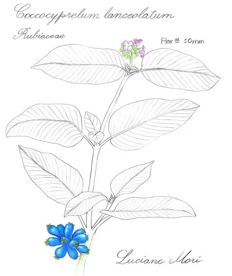 074-Diario-de-estudos-botanicos-Lu-Mori-.jpg
