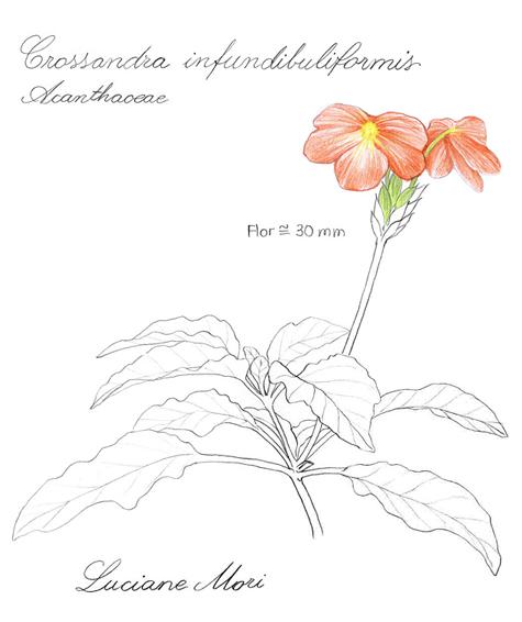075-Diario-de-estudos-botanicos-Lu-Mori-.jpg