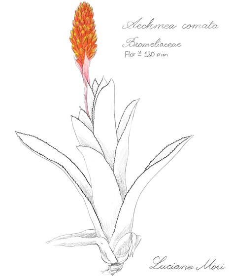 076-Diario-de-estudos-botanicos-Lu-Mori-.jpg