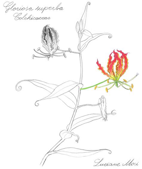077-Diario-de-estudos-botanicos-Lu-Mori-.jpg