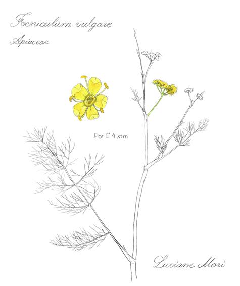 078-Diario-de-estudos-botanicos-Lu-Mori-.jpg