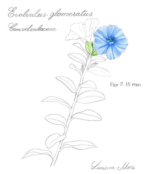 079-Diario-de-estudos-botanicos-Lu-Mori-.jpg