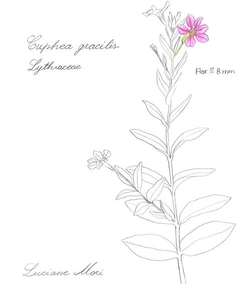 081-Diario-de-estudos-botanicos-Lu-Mori-.jpg