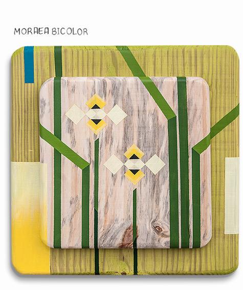 024-Diario-de-estudos-botanicos-Lu-Mori.jpg