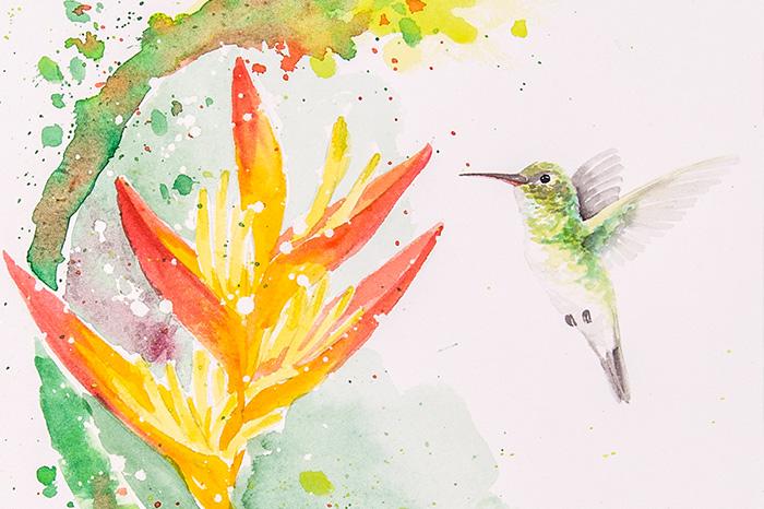 hummingbirds-lu-mori-SFCC-1.jpg